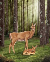Doe and Fawn Fine Art Print