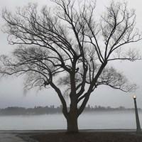 Tree In Fog II Fine Art Print