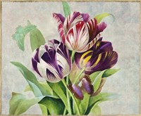 Bouquet Tulips I Fine Art Print