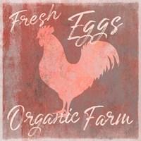 Organic Farm Rooster Framed Print