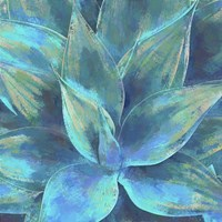 Agave Forms III Framed Print