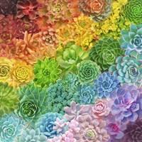 Rainbow Succulents Framed Print