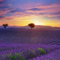 Lavender Sky Sunset Fine Art Print