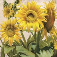 Sunflower Surprise 3 Fine Art Print