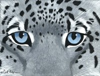 Snow Leopard Eyes Fine Art Print