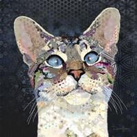 Siamese Marvin Fine Art Print