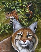 Bobcats Fine Art Print
