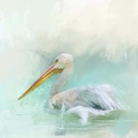 The White Pelican Fine Art Print