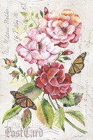 Summer Rose Postcard A Fine Art Print