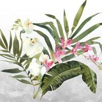 Beautiful Orchids B Framed Print