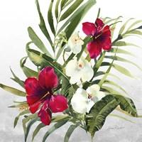 Beautiful Orchids D Framed Print