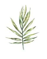 Areca palm leaf Fine Art Print