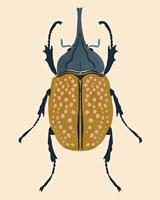 Beetle Bug II Framed Print