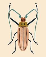 Beetle Bug IV Framed Print