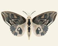 Neutral Moth II Framed Print