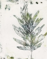 Presence of Nature VIII Fine Art Print