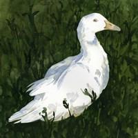 Lone Duck I Framed Print