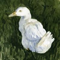 Lone Duck II Framed Print