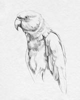 Parrot Portrait I Fine Art Print