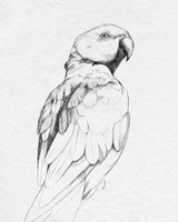 Parrot Portrait II Fine Art Print
