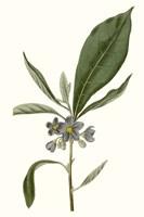 Soft Blue Botanicals II Framed Print