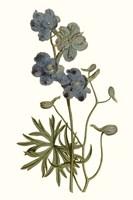 Soft Blue Botanicals V Framed Print