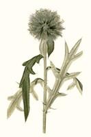 Soft Blue Botanicals VI Framed Print