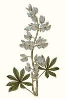Soft Blue Botanicals VIII Framed Print