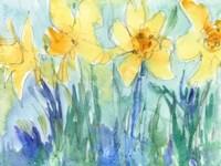 Daffodil Blooms II Fine Art Print