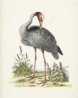 Antique Heron & Cranes I Fine Art Print