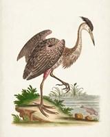 Antique Heron & Cranes III Fine Art Print