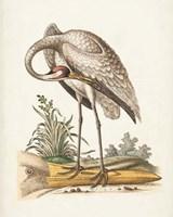 Antique Heron & Cranes IV Fine Art Print