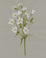 White Field Flowers II Framed Print
