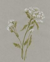 White Field Flowers III Framed Print