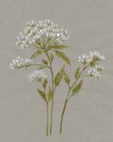 White Field Flowers IV Framed Print