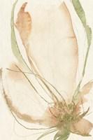Petal Sketches I Framed Print