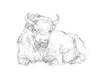 Bison Contour Sketch II Framed Print