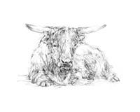 Highland Cattle Sketch II Framed Print