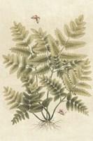 Ferns in Antique I Framed Print