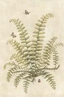 Ferns in Antique V Framed Print