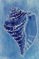 Cerulean Shells I Framed Print