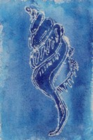 Cerulean Shells IV Framed Print