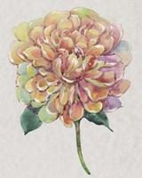 Multicolor Floral I Framed Print