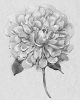 Silvertone Floral I Framed Print