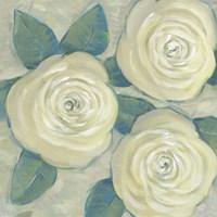 Roses in Bloom II Framed Print