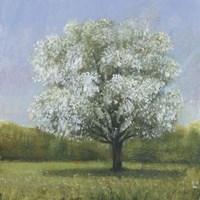 Spring Blossom Tree II Framed Print