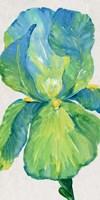 Iris Bloom in Green I Framed Print