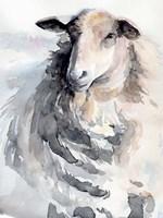 Watercolor Sheep II Framed Print