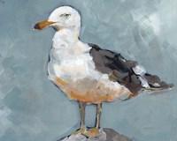 Seagull Stance II Framed Print