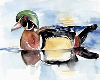 Watercolor Woodduck I Framed Print